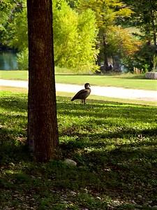 +++A241856 Bandera City Park - Duck – Version 2