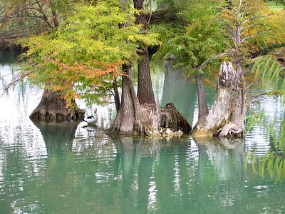 +++A241801 Bandera City Park - Duck & Cypress – Version 2