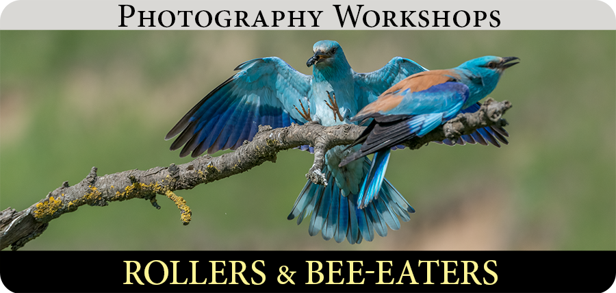Bee-eaters & Rollers Photography Workshops