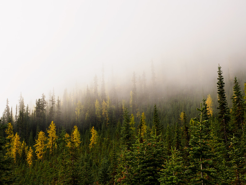 Low clouds over the larch and fir
