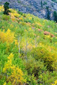 Fall Colors, Banff