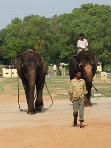 Elephants at Mysore Palace