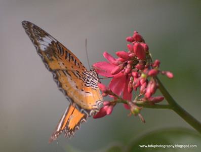 Bangkok butterfly garden pt 2 - December 2009