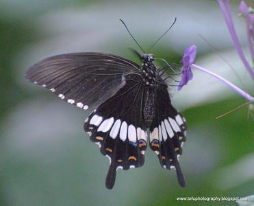 Bangkok butterfly garden pt 1 - December 2009