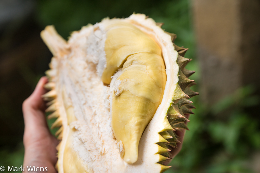 durian thailand 33 X2 Durian Garden of Eden   Eating the King Of Fruits in Nonthaburi