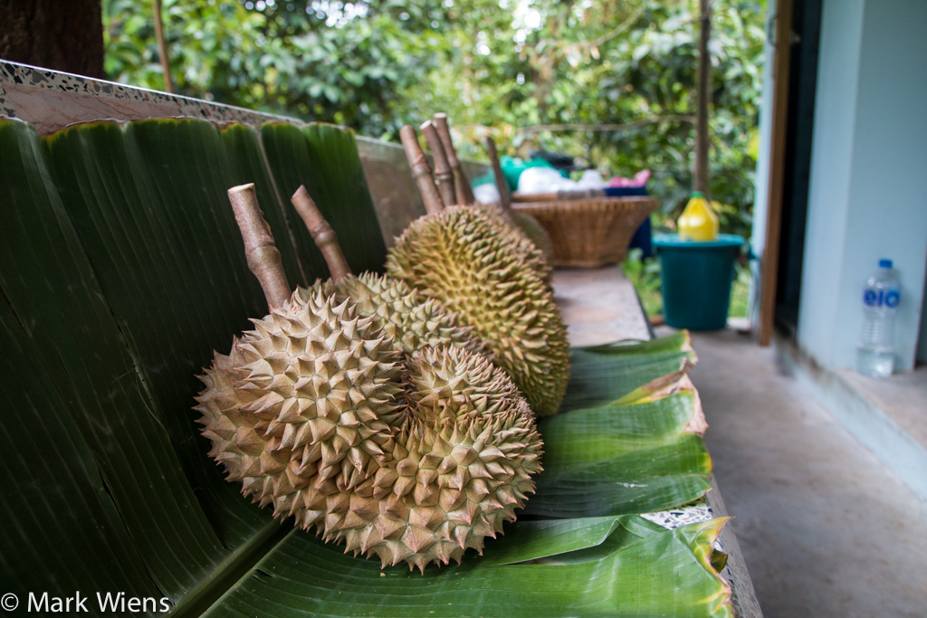 durian thailand 55 X2 Durian Garden of Eden   Eating the King Of Fruits in Nonthaburi