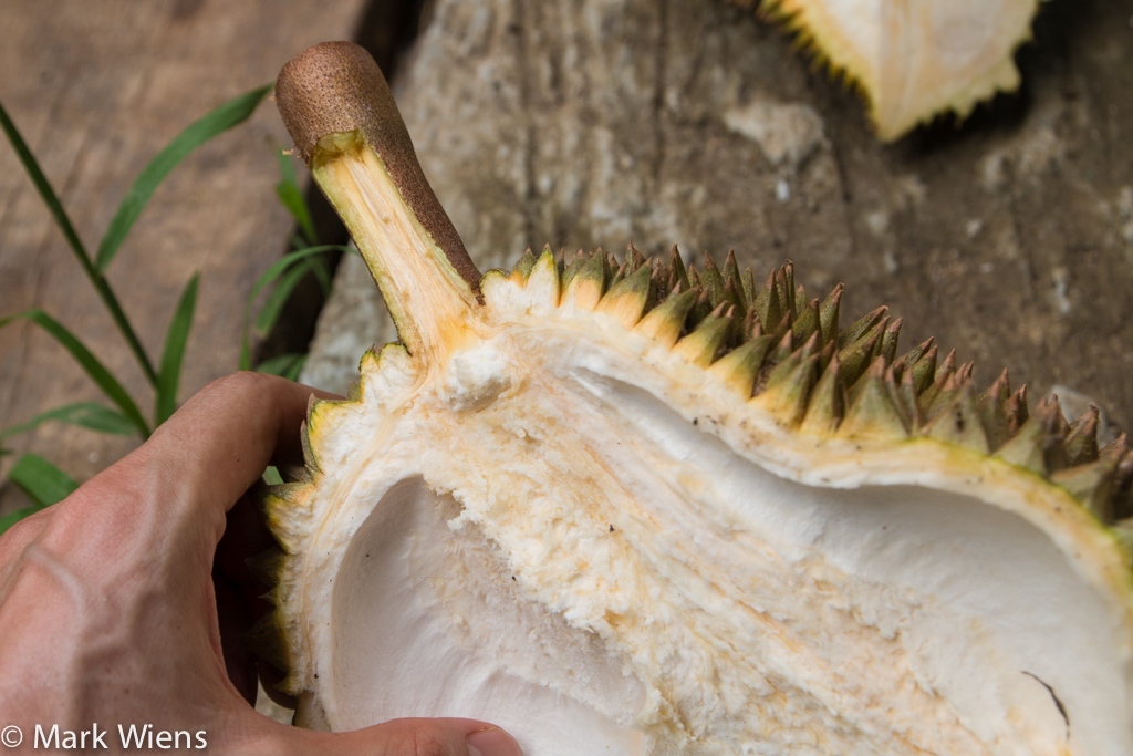How to choose a durian