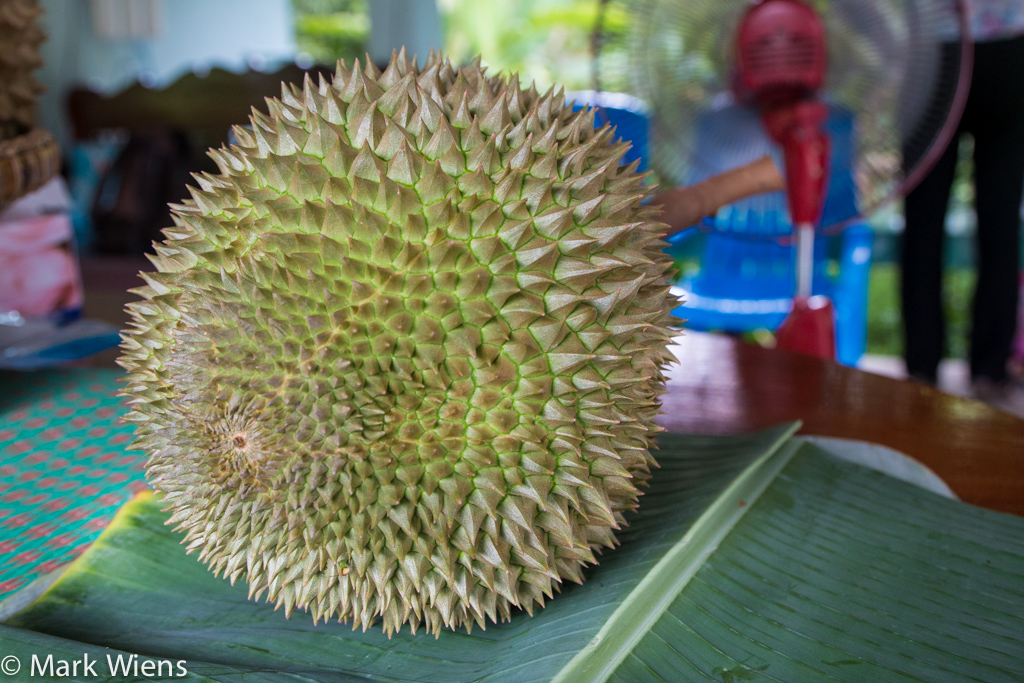 durian thailand 59 X2 Durian Garden of Eden   Eating the King Of Fruits in Nonthaburi