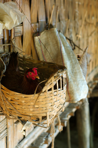 Chickens are suspended in baskets keeping the village clean