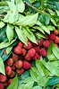 Bushels of lychees for sale