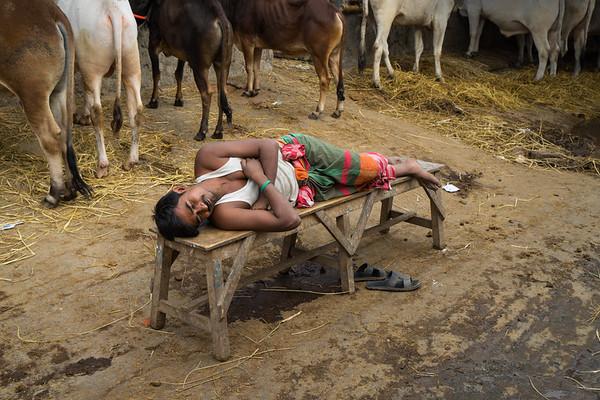 Gabtoly Cattle Market