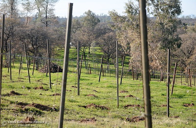 Many trees and the vinyard have been torn out while State and Federal agencies help clean up debris at the Bangor Ranch and Vinyard following the La Porte Fire in Bangor, Calif. Wed. Dec. 13, 2017. (Bill Husa -- Enterprise-Record)