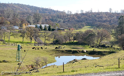 Some areas are looking lush and green following the La Porte Fire in Bangor, Calif. Wed. Dec. 13, 2017. (Bill Husa -- Enterprise-Record)