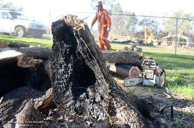 Antonio Penarrocha of Oregon House salvages wood with permission from the owner at the Bangor Ranch and Vinyard following the La Porte Fire in Bangor, Calif. Wed. Dec. 13, 2017. (Bill Husa -- Enterprise-Record)