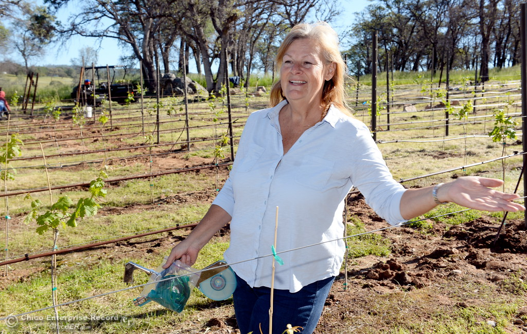 . Owner, Karen Pappillon talks about her new grape vines currently being planted at Bangor Ranch Vinyard & Winery on La Porte Rd. in Bangor, Calif. Friday April 20, 2018. (Bill Husa / Chico Enterprise-Record)