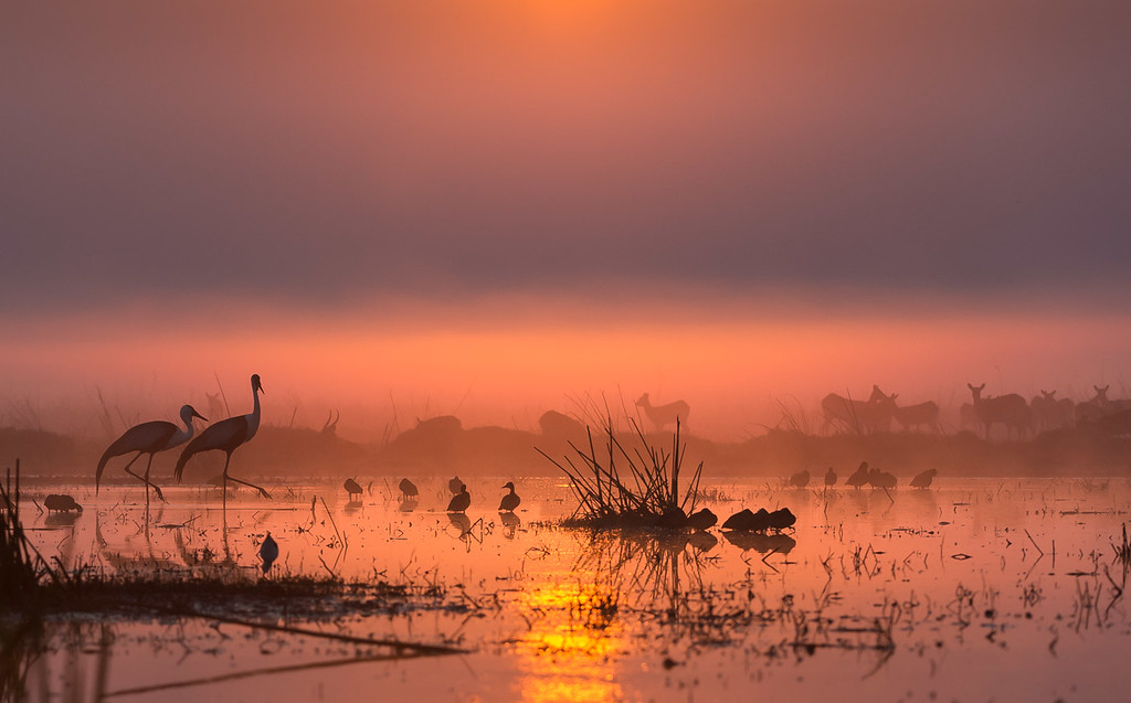 Wattled cranes, black lechwe, and white-faced whistling ducks at dawn. Nature's Best Photography Africa honours, 2016