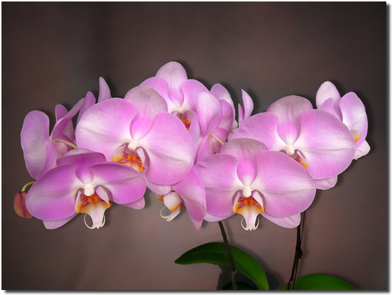 Somerville Orchids - Vancouver Orchid Designs