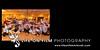 Aidan Shearer Album 017 (Sides 33-34)