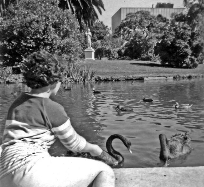Feeding the swans.