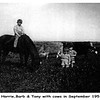 Horrie: Barbara: Tony: with horse & cows on the farm.