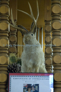 They used to cook jackalope, but no more since it's endangered...