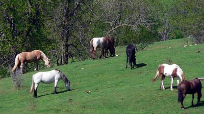 El Ranch Manana Campground, Richmond, MN  2005