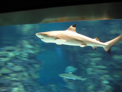 Barcelona Aquarium-9