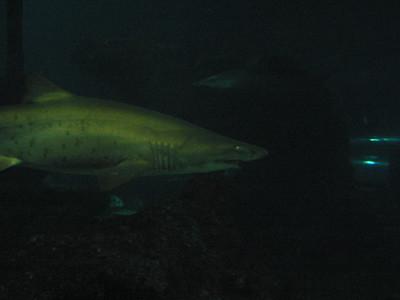 Barcelona Aquarium-22
