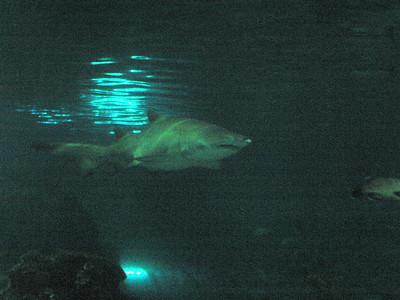 Barcelona Aquarium-25