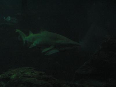 Barcelona Aquarium-28