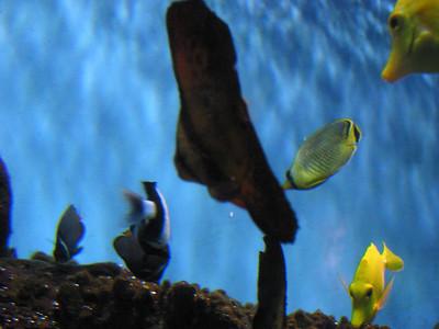 Barcelona Aquarium-16