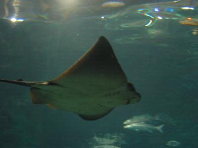 Barcelona Aquarium-21