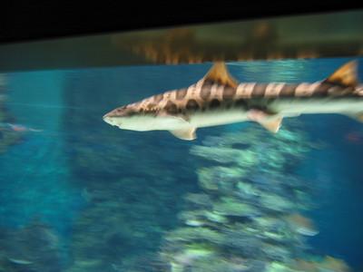 Barcelona Aquarium-7