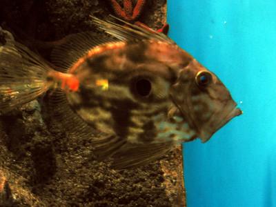 Barcelona Aquarium-5