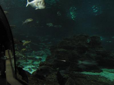 Barcelona Aquarium-27