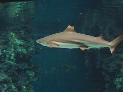 Barcelona Aquarium-12
