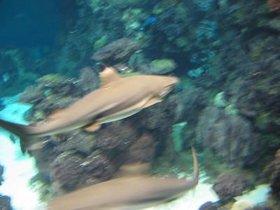 Barcelona Aquarium-10