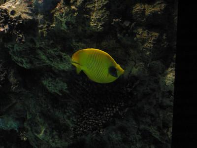 Barcelona Aquarium-13