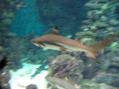Barcelona Aquarium-6