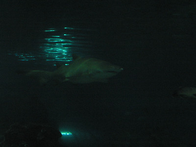 Barcelona Aquarium-26