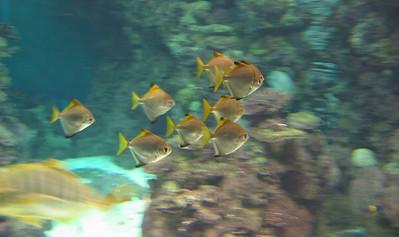 Barcelona Aquarium-8