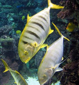 Barcelona Aquarium-11