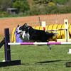 Bardney dog show-84