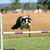 Bardney dog show-58