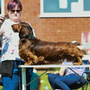 Bardney dog show-18