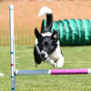 Bardney dog show-49