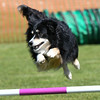 Bardney dog show-64