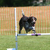 Bardney dog show-50