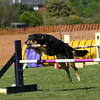 Bardney dog show-86