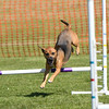 Bardney dog show-55